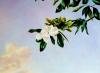 sky-mural-detail-010